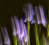 Abstract Motion Blur Flowers