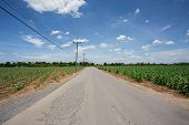 road in Sugarcane Farm With Blue Sky