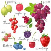 Great berries set over white background