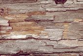 Backgrounds Bark And Wood Texture