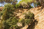 Trees On A Cliff Calella Spain