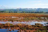 Willapa National Wildlife Refuge Tidal Flats