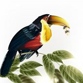 Background With Vector Detailed Colorful Tropical Bird