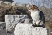 Cat In Ephesus