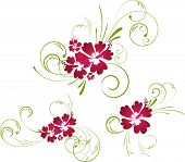 image of hibiscus flower  - Colorful beautiful hibiscus floral elements for your designs - JPG