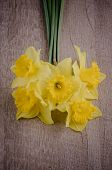 picture of jonquils  - Yellow jonquil flowers on brown wooden background - JPG