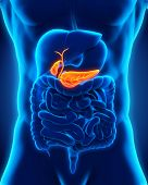 stock photo of internal organs  - Human Gallbladder and Pancreas Anatomy Illustration - JPG