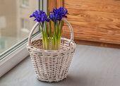 Irises In A Basket  On The Window