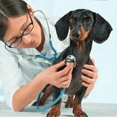 Doctor Veterinarian Listens A Dog