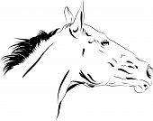 foto of horse head  - horse head vector close up on a white - JPG