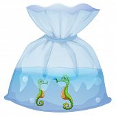 Illustration of a pouch with seahorses on a white background