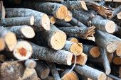 Alder Firewood Stacked With Bunch