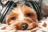 Dog Listen To Music