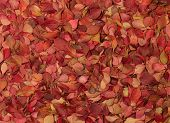 Autumn Pattern. Barberry