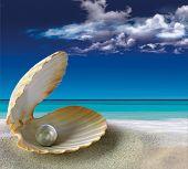 pic of shells  - shell - JPG