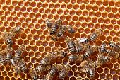 Bee honeycombs with honey and bees