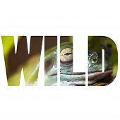 Word Wild Frog In Natural Habitat