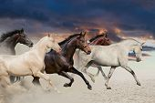 stock photo of galloping horse  - Five horse run gallop in desert at sunset - JPG