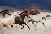 foto of galloping horse  - Five horse run gallop in desert at sunset - JPG