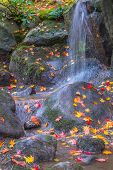 Waterfall Fallen Autumn Leaves