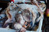 Fish At Farmers Market