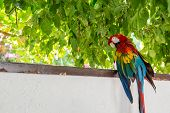 Red Blue Green Macaw Parrot