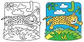 Little cheetah or jaguar coloring book. Alphabet J