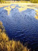Marshland In Fall