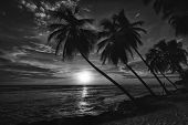 Beautiful sunset over the sea with a view at palms on the white beach on a Caribbean island of Barbados. Black and white