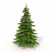Spruce on a light background with shadow