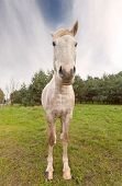 Wide Angle Picture Of A Horse.