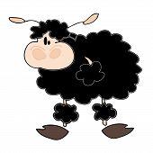 Funny schwarze Schafe.