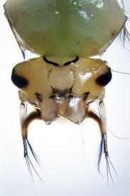 foto of gnat  - Micro photo - JPG