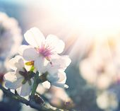 foto of spring-weather  - Springtime - JPG