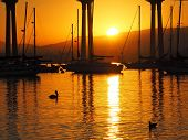 foto of duck  - A vivid sunrise over the San Diego Bay is complimented by a pelican and duck floating by in the foreground - JPG