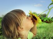 image of sunflower  - Happy boy with sunflower outdoors - JPG