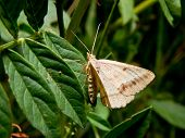 stock photo of moth  - The moth flies in the dense gas - JPG