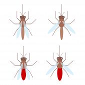 foto of mosquito  - set of mosquitoes with blood Isolated on white background flat style - JPG
