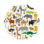 foto of hippopotamus  - Animal Africa - JPG