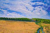 Wine Plantation In Macedonia
