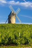 vineyards with windmill near Ch?nas, Beaujolais, Burgundy, France