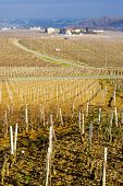 vineyards of Pouilly-Fuisse region, Burgundy, France