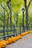 autumnal Central Park, New York City, USA