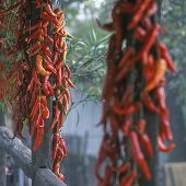 peppers, Holloke, Hungary