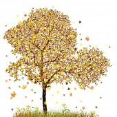 autumn tree with white background