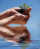 Hands With A Plant On The Water