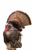 Wild Eastern Turkey 2