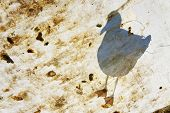 picture of tarp  - Seagull on tarp with bird droppings in marina - JPG