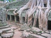 A Banyan Tree Over Old Ruin Temple, Ta Prohm, Bayon, Angkor Tom, Cambodgia