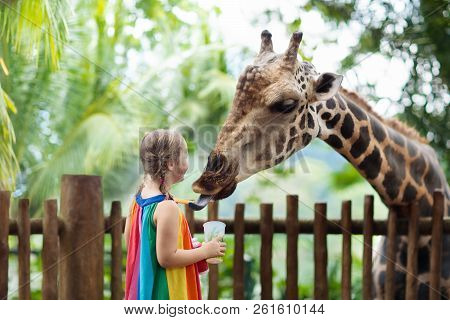 Kids Feed Giraffe At Zoo